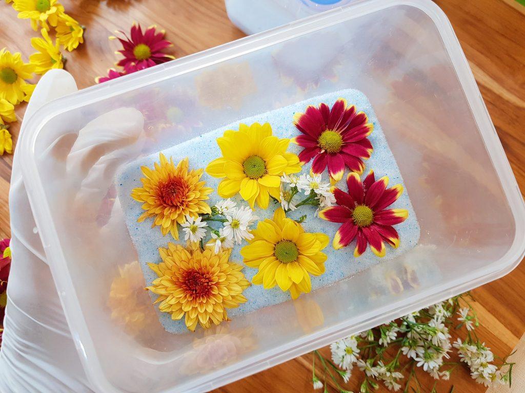 การใช้ silica เก็บรักษาดอกไม้